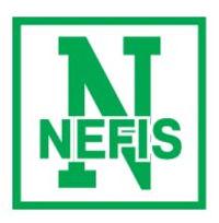 Компания Nefis - фото, картинка